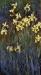 Claude-Monet-77395