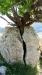 Tree-f628